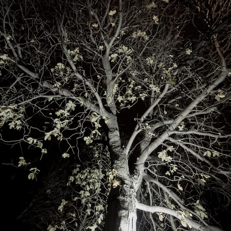 scarry tree